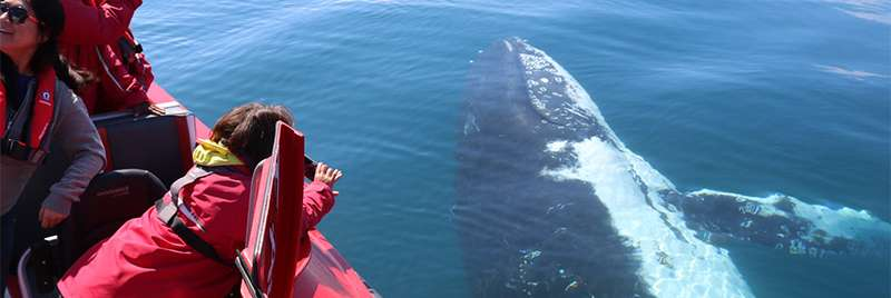 Plan Your Whale Watching Adventure Now